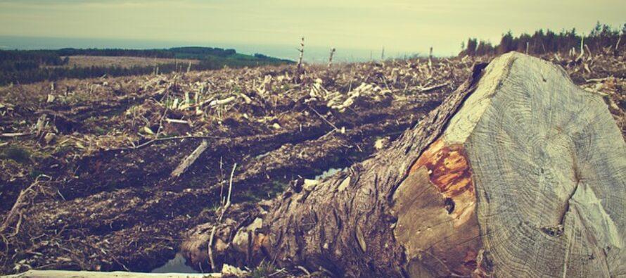 Brasile.Il bluff di Bolsonaro sul clima, mentre continua le deforestazioni