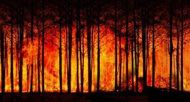 Mentre l'Amazzonia brucia Bolsonaro scherza