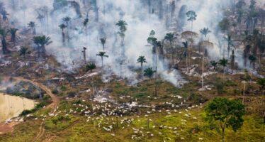 Nel Brasile che brucia: «I nostri corpi in prima linea per salvarla»