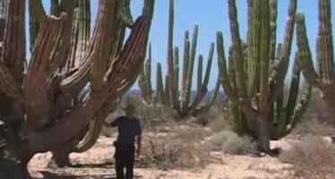 Trump alza il Muro antimigranti in una oasi Unesco. E tutela chi inquina