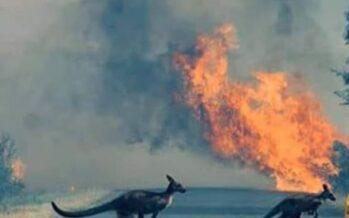 Clima. Incendi in Australia, il governo minimizza