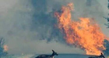 L'Australia assediata dai roghi, bruciano persino le spiagge