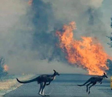 Clima Incendi In Australia Il Governo Minimizza Diritti