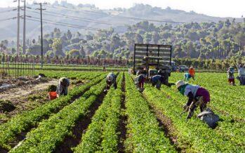 Lavoro agricolo, l'anno orribile dei braccianti immigrati