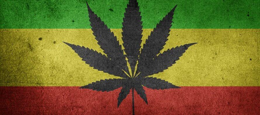 Droghe. All'ONU finalmente riconosciuto il valore terapeutico della Cannabis