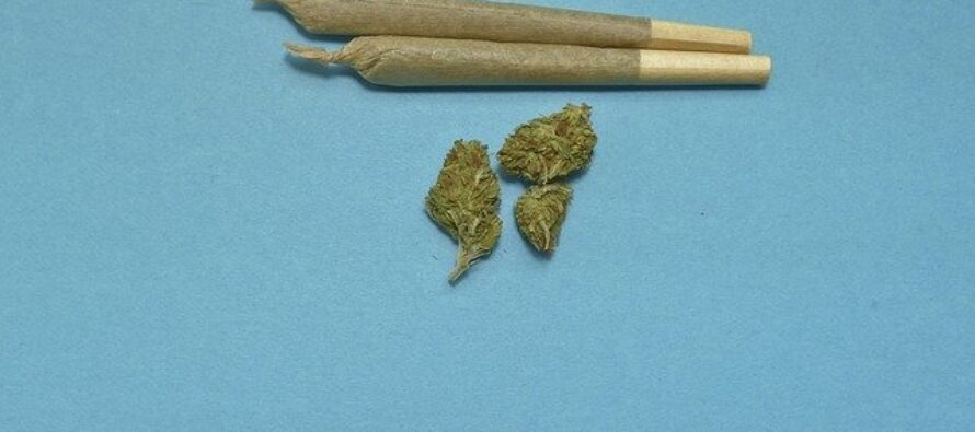 Lo Stato di New York legalizza la cannabis e redistribuisce i proventi