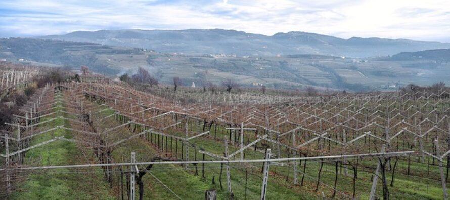 Europa. 100 miliardi buttati: la Politica Agricola Comune surriscalda il clima