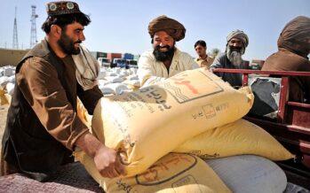 Narco-Stati. In Afghanistan ora l'oppio anche sui terreni statali